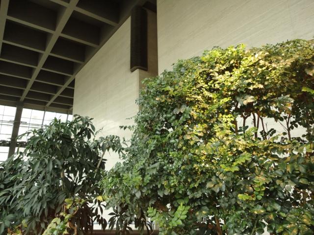 オフィス緑化